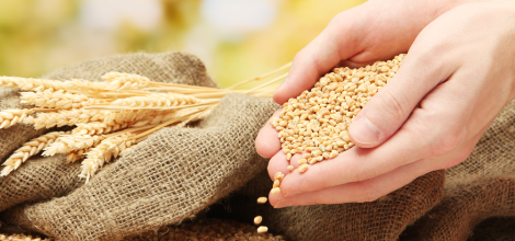The Benefits of Cracked Wheat